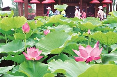 孟津:農旅融合 美了鄉村 富了農民